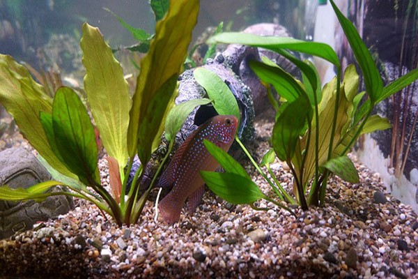 10 the best live plants for betta fish